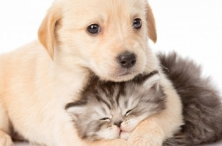 Salud Animal invita a Capacitación sobre Campañas de Esterilizaciones Masivas