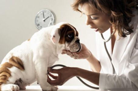 Crece la alerta mundial sobre los casos de coronavirus en mascotas