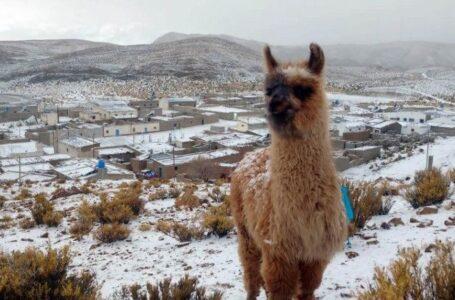 La sorpresa  en pleno verano: Nieve en Jujuy