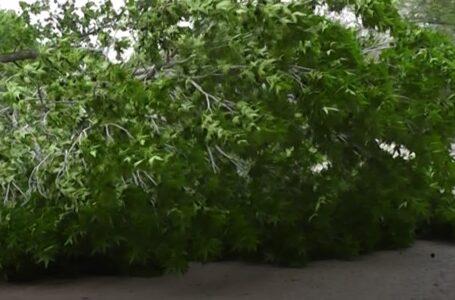El fuerte viento provocó algunas caídas de árboles y ramas de gran porte, columnas y cortes de bajadas de cables en Funes